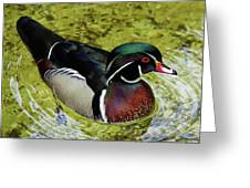 Dc Duck Greeting Card