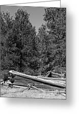 Ddp Djd B And W 1880's Cabin Ruins In Montana 3 Greeting Card