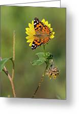Ddp Djd Painted Lady On Sunflower 2690 Greeting Card
