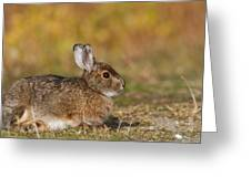 Ddp Djd Snowshoe Hare 98 Greeting Card