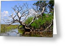 Dead Cedar Tree In Waccasassa Preserve Greeting Card