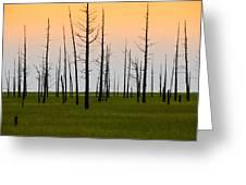 Dead Cedars Greeting Card