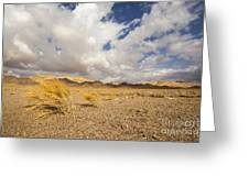 Dead Dry Grass In The Desert Greeting Card