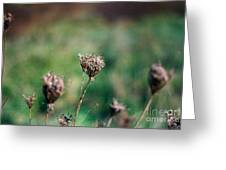 Dead Flower Greeting Card