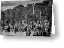 Dead Lakes Cypress Stumps Bw  Greeting Card