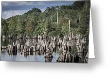 Dead Lakes Cypress Stumps Greeting Card