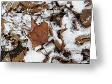 Dead Leaves In The Snow Greeting Card