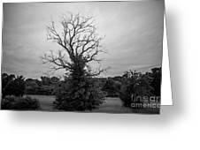 Dead Live Oak Greeting Card