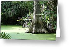 Wild Florida Dead Mans River Greeting Card