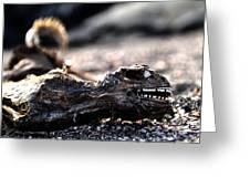 Dead Marine Iguana Greeting Card