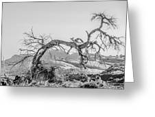 Dead Old Tree Near Monument Valley Arizona Greeting Card