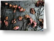 Dead Roses 5 Greeting Card