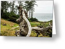 Dead Tree At Ecola Park Greeting Card