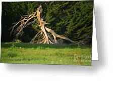 Dead Tree II Greeting Card
