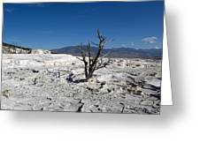 Dead Tree In Yellowstone Park Hot Springs  Greeting Card