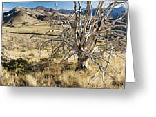 Dead Tree Panorama Greeting Card