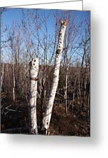 Dead Tree Greeting Card by Richard Mitchell