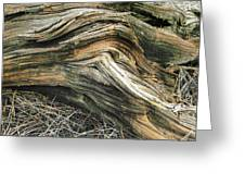 Dead Tree Textures Greeting Card