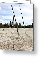 Dead Trees, Yellowstone Greeting Card