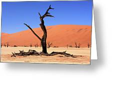 Dead Vlei Tree  Greeting Card by Aidan Moran