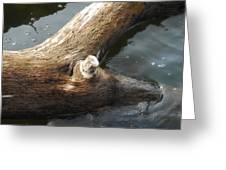 Dead Wood Greeting Card