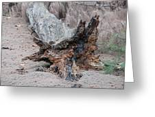 Dead Wood In Color Greeting Card