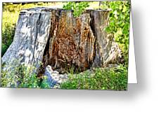 Deadwood On Cherry Creek Trail 3 Greeting Card