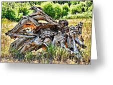 Deadwood On Cherry Creek Trail 4 Greeting Card