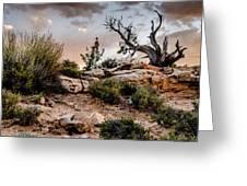 Deadwood Sunset Greeting Card