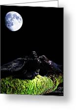 Death Of A Young Raven Greeting Card by Wingsdomain Art and Photography