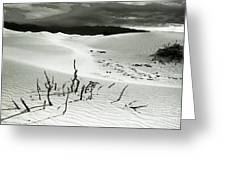 Death Valley Brush Greeting Card