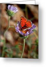 Death Valley Butterfly Greeting Card