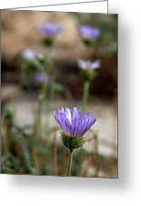 Death Valley Lavenders Greeting Card