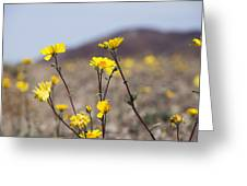 Death Valley Super Bloom 2016 Greeting Card