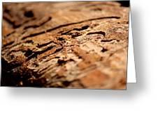 Debarked Tree Greeting Card