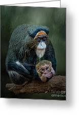 Debrazza's Monkey And Baby Greeting Card