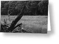 Debris Black And White Greeting Card