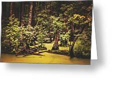 Decayed Vegetation - Run Swamp, North Carolina Greeting Card