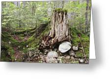 Decaying Tree Stump Greeting Card