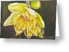 December Flower Narcissus Greeting Card
