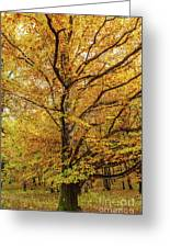 Deciduous Forest In The Autumn Greeting Card