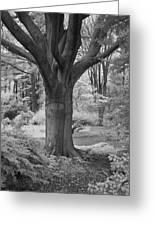 Deciduous Tree Ir Greeting Card