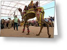 Decorated Camel Pushkar Greeting Card