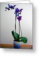 Decorative Orchid Photo A6517 Greeting Card