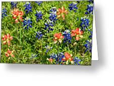 Decorative Texas Bluebonnets Meadow Digital Photo G33117 Greeting Card