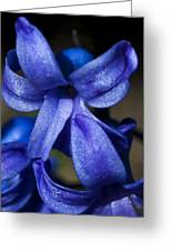 Deep Blue Flower Greeting Card