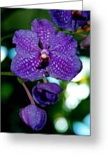 Deep Blue Orchid Greeting Card