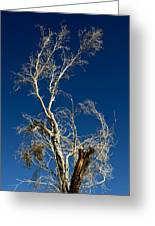 Deep Blue White Tree Greeting Card