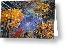 Deep Canopy Greeting Card