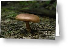 Deep Forest Dweller Greeting Card